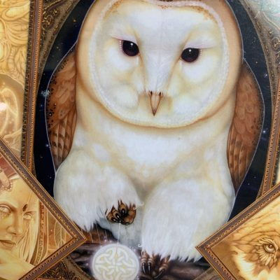 Animal Oracles & Tarot